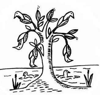 Barnacle Goose Myth