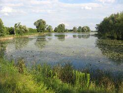 Jezioro Powsinkowskie.jpg