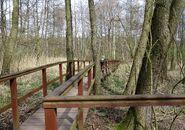 Park Leśny Bródni (kładka nad mokradłem)
