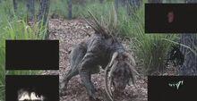 Predatordogs5