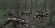 Predatordogs2