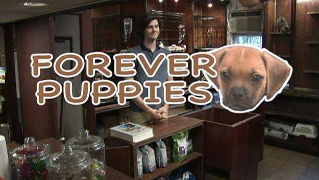 File:204-puppies.jpeg