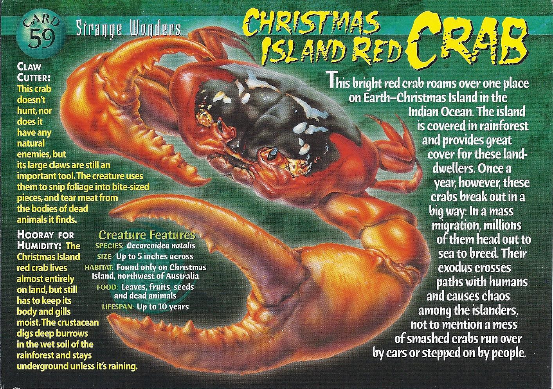 Christmas Island Red Crab   Wierd N'wild Creatures Wiki   FANDOM powered by Wikia