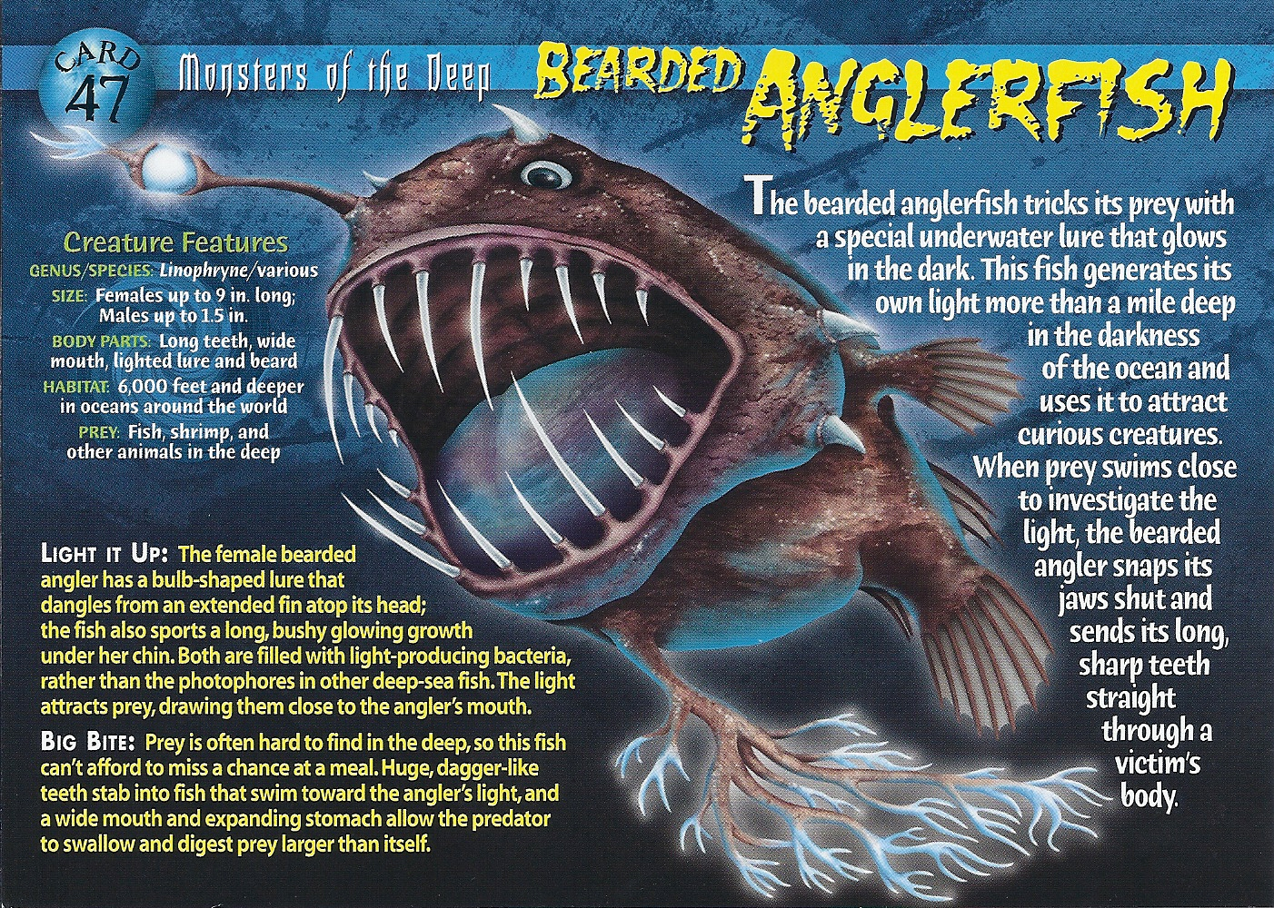 Anglerfish  Wikipedia