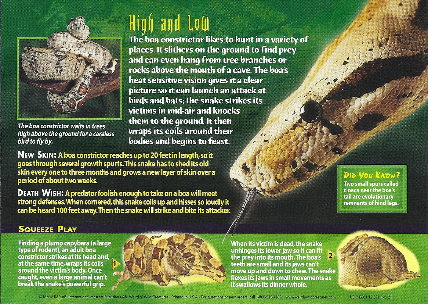 Boa Constrictor Marvel Back Boa Constrictor Back