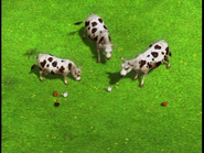 TheCowsandtheChickens