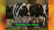 CallingAllCows4