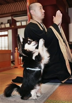 File:PrayingDog.jpg