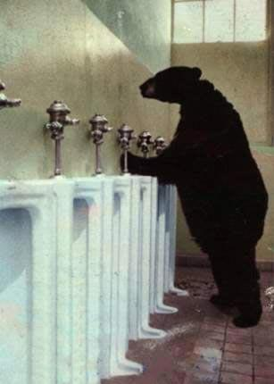File:Bear Urinal.jpg