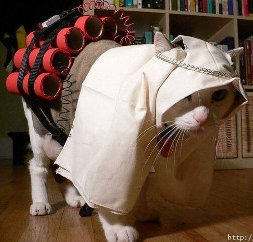 File:Suicide bomber cat.JPG