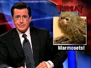 Threat2Marmosets