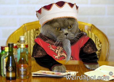 File:King cat.jpg