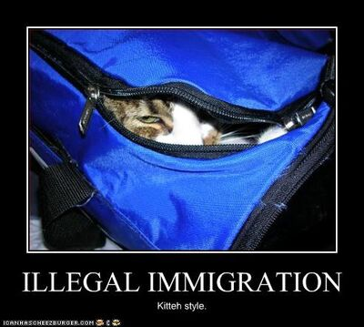 Funny-pictures-cat-immigrates-illegally