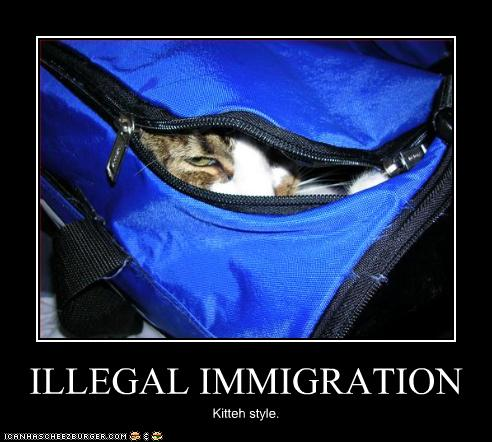 File:Funny-pictures-cat-immigrates-illegally.jpg