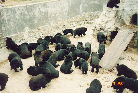 File:Largegroupbears.jpg