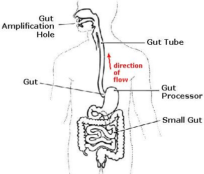 File:Gut, full diagram.jpg