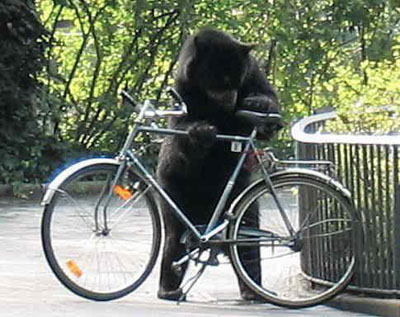 File:BearInspectBicycle.jpg
