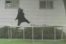 File:BearTrampoline.jpg