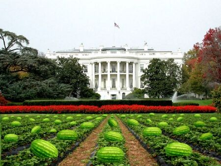 Watermellonwhitehouse