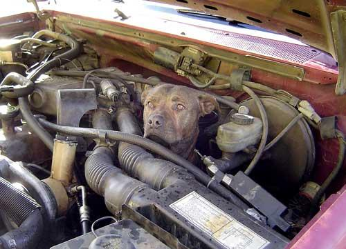 File:PitbullTruckEngine.jpg