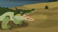Croc.00232