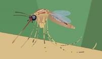 Mosquito.jpeg