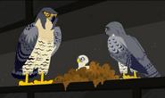 Falcon.city.wildkratts.0001