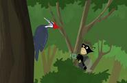 Woodpecker.wk