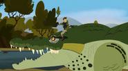 Croc.00136