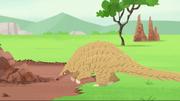 Ground Pangolin