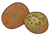 Kiwwispoiler