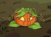 ~Mirta As A Pumpkin~
