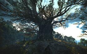 Ancient Oak 1