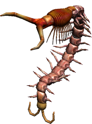File:Giant Centipede23.png
