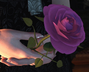 Tw3 Iris rose
