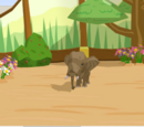 Baby African Forest Elephant