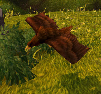 Thieving Plainshawk