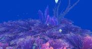 Seabrush-coral