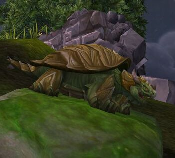 Bulgeback Tortoise