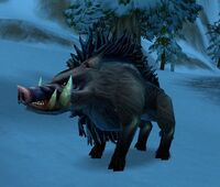 Elder Crag Boar
