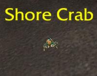 ShoreCrab