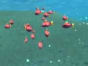 Abundant Firefin Snapper School under surface