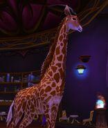 Aurosalia giraffe