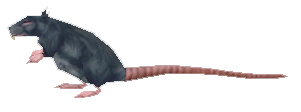 Zul'Drak Rat
