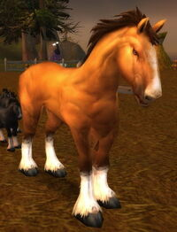 Havenshire Stallion