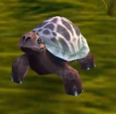 Image of Turquoise Turtle