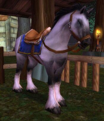 Riding White Stallion