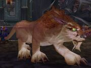 Halazzi (Lynx)