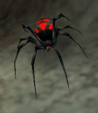 Widow Spiderling