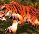 Young Stranglethorn Tiger